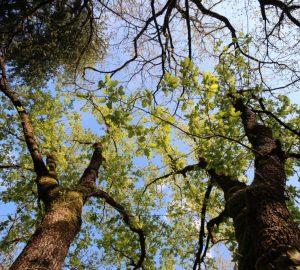 Il bosco incantato di Sefro